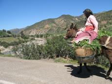 Donkey on the Road